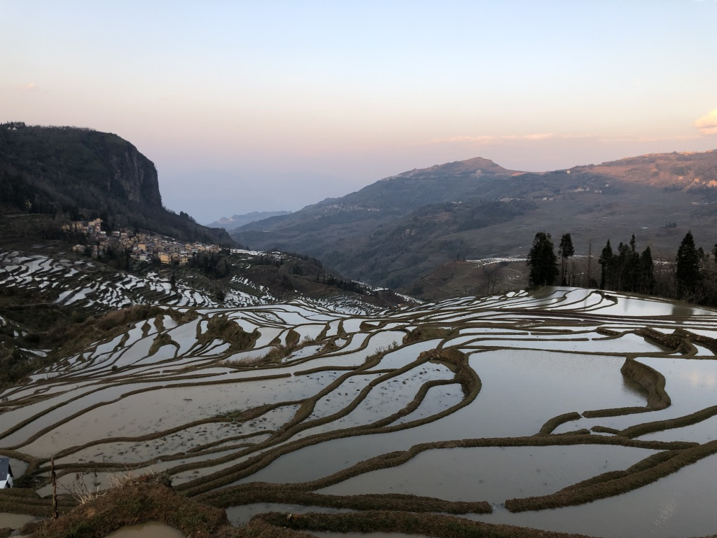 Ducks and Rice Terraces (Yunnan Spring Study Trip)